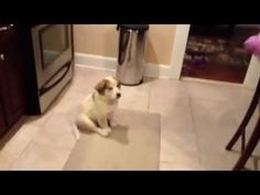 Teaching puppy how to catch. I have watched this ten times and keep laughing