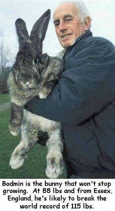 Fat bunny!...so dang cute!