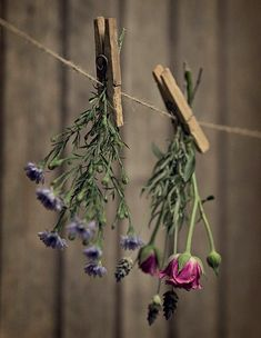 Decoration Plante, Country Charm, Dried Flowers, Flowers Gif, Hanging Flowers, Fresh Flowers, Beautiful Flowers, Herbalism, Bouquet