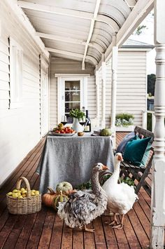 Inquisitive free-ranging Sebastopol geese, with their distinctive ruffled feathers, check out the autumn harvest on the verandah at Babbington Park | Photography: Mark Roper | Styling: Lee Blaylock