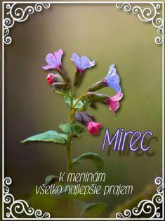 Mirec Plants, Plant, Planets
