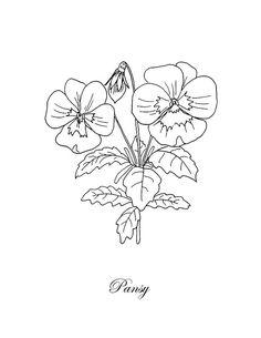 Botanical by Masha Batkova Flower Line Drawings, Flower Drawing Tutorials, Botanical Line Drawing, Botanical Drawings, Botanical Art, Botanical Illustration, Pansy Tattoo, Flower Tattoos, Capricorn Tattoo