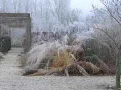 Locus flavum garden in Holland-grasses next to wisteria walkway in winter - designed by Jikke Hamerpagt - gardeninggonewild.com/?p=12129#