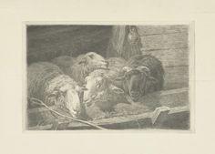 Frans Lebret | Drie schapen en een ram voor een voederbak, Frans Lebret, 1896 | Drie schapen en een ram eten voor een stal uit de voederbak.