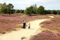 Naturschutzpark Lüneburger Heide Bad Bevensen, Hotel Berlin, Country Roads, Nature, Ideas