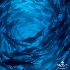 """1,873 Likes, 3 Comments - Sea Shepherd (@seashepherd) on Instagram: """"Our ship The MV Bob Barker is currently engaged in the 2nd Operation Albacore to stop IUU fishing,…"""""""