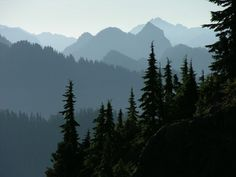 Washington: Olympic Mountains and forest layered landscape