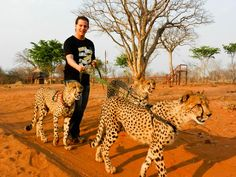 Walking cheetahs at the Victoria Falls in Zambia, Africa. Cheetahs, I Want To Travel, East Africa, Dog Leash, Walking Tour, Outdoor Travel, Travel Around The World, Kayaking, Travel Photos