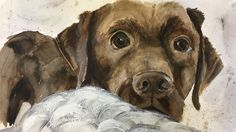 Hand painted picture of one of our four legged friends by The Little Paper Shop. Lifestyle Store, Puppy Eyes, Creative Studio, Four Legged, Watercolours, Labrador Retriever, Hand Painted, Puppies, Illustrations