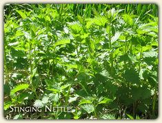 Online Herbal Remedies Advice The Healing Power of Medicinal Plants