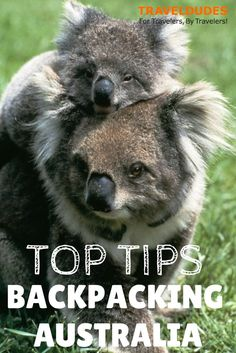 Byron Bay Australia Things To Do - - - Australia Fire Kangaroo - Australia Facts Australian Animals Travel With Kids, Family Travel, Things To Do In Brisbane, Beautiful Places To Travel, Wonderful Places, Backpacking Tips, Mundo Animal, Adventure Is Out There, Wanderlust Travel
