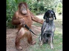Funny Animal Videos New 2016 (Kumpulan video hewan lucu 2016)