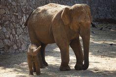 Bébé elephant