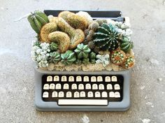 Cactus and vintage typewriter // Upcycled planters by Botanical Project // Instagram : @botanical_project Succulent Arrangements, Cacti And Succulents, Indoor Garden, Indoor Plants, Garden Show, Vintage Typewriters, Bathroom Pictures, Photosynthesis, Home Interior