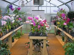 Having a orchid greenhouse is one of my dreams. :)