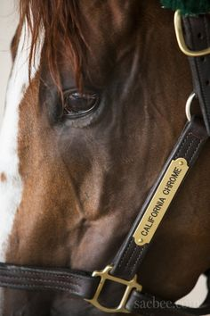 California Chrome, 2014 Kentucky Derby Winner
