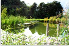Turn your pool into a pond pool to pond conversion and for Convert pool into garden