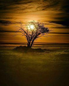 Moonlight through tree