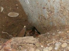 Crawl Space frequent guest... Mold feeds Mule Crickets which feeds frogs which feeds snakes