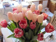 Tulips from  my grandchildren.