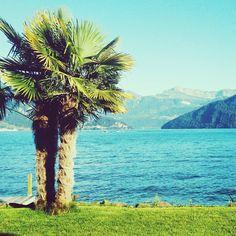 Mein Schweizer Sommer - von Bergen und Palmen - Reisetipps Bergen, Mountains, Park, Instagram, Nature, Travel, Swiss Guard, Tourism, Tours