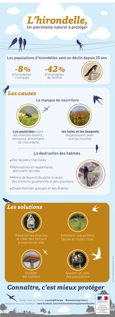 Les 9 et 10 mai : journées mondiales des oiseaux migrateurs - Ministère du Développement durable