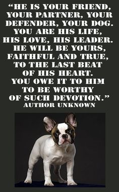 HE IS YOUR FRIEND, YOUR PARTNER, YOUR DEFENDER, YOUR DOG.YOU ARE HIS LIFE, HIS LOVE, HIS LEADER. HE W'ILL BE YOURS, FAITHFUL AND TRUE ,TO THE LAST BEAT OF HIS HEART. YOU OWE IT TO HIM TO BE E WORTHY OF SUCH DEVOTION. - Antisthenes