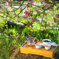 """""""Tea to the English is really a picnic indoors."""" - Alice Walker. #tea #quote #puerh #puer #sheng #picoftheday #teaware #teacup #teaaddict #tealover #explore #lifestyle #lovelife #spring #wymmtea #picnic #sunshine #茶 #中国茶 #普洱"""