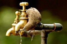Thirsty on the fly! Perfect Timing, Pet Puppy, Zoology, Water Garden, Bird Feathers, Beautiful Birds, Animal Kingdom, Peace And Love, Cool Pictures