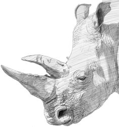 Quick Sketch - Rhino
