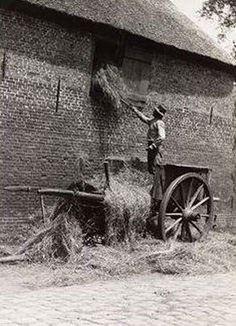 Opslaan  van hooi. Agriculture, Farming, Old Pictures, Old Photos, Vintage Photographs, Vintage Photos, Old Farm Equipment, Farm Photo, Vintage Farm