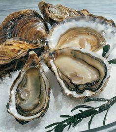 La fine de claire. Des huitres Marennes Oleron, affinées ou élevées en claire ce qui leur confère un goût plus fin.