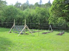 All Dwarf Cider Apple trees that were all grafted took (Yeah) along with Trellised berries on left will have electric fence (powered by solar) surround with our cool old gate that had been saved from years and years ago and will put a header on top of poles eventually with our Stueve name on it...by next year hopefully weed free