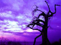 #tree #sunset