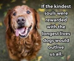 Best Quotes for Dogs with HD Images