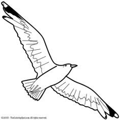 Seagull Coloring Pages Find This Pin And More On Bird