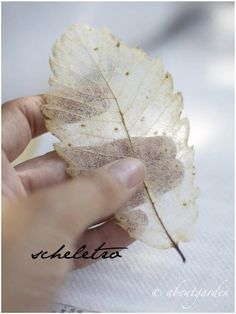 About Garden tutorial: how to make a skeleton leaf