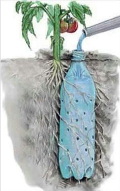 Cool irrigation for tomatoe plants or whatever and recycles to!