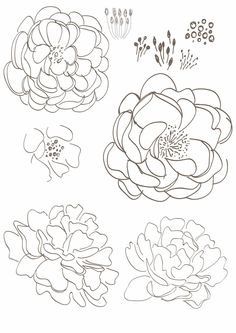 500 Best Floral Coloring Pages for Adults images in 2019
