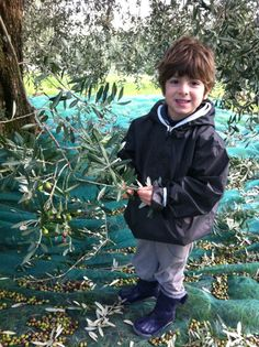 Flashback from last year's olive oil harvest at Villa Campestri, as you can see, Cosimo is a very willing student!