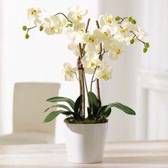 Kunstpflanze Orchideentopf, Elegance, Kunststoff/ Naturholz/ Keramik, ca. H54 cm Vorderansicht