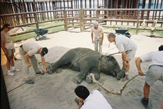 10 Reasons Not to Attend the Circus | Features | PETA