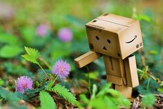 человек-коробка и цветок danbo