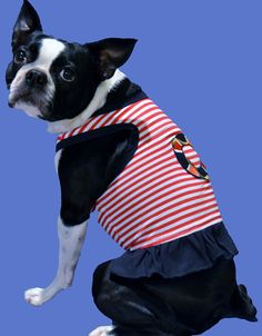 Boston Terrier dog Lucy is cute in her girly Sailor Dress.  www.fetchdogfashions.com  #puppy