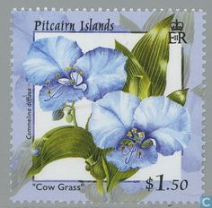Cow Grass (Commelina diffusa).  Flowers 2000 from Pitcairn islands