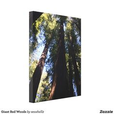 Giant Red Woods Canvas Print #redwoods #gianttrees #California