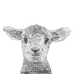 Browse Laurence the Lamb Print and more from Ros Shiers at Wolf & Badger - the leading destination for independent designer fashion, jewellery and homewares. Lamm Tattoo, Lamb Drawing, Woodcut Tattoo, Tasteful Tattoos, Lovely Creatures, Pencil Illustration, Animal Illustrations, Farm Yard, Pet Portraits
