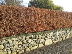 All types of top quality well bushed barerooted hedging supplied and delivered nationwide.Full range of trees available for commerical, agricultural and garden situations ranging in size from 2-3 ft to 10 ft starting at €1 eachFree nationwide delivery serviceTo view a full range of our products visit our website;www.hedging.ie#xtor=CS1-41-[share]