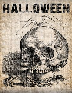 Antique Skeleton Spider Halloween All Hallows by AntiqueGraphique  www.handmaiden-theblog.blogspot.com