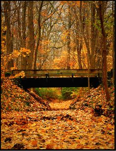 Bridge surrounded by Autumn Leaves